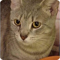 Adopt A Pet :: Mama Mia - Chesapeake, VA