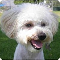 Adopt A Pet :: Clancy - La Costa, CA