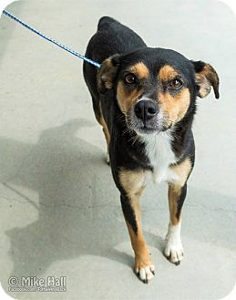 Terrier (Unknown Type, Medium) Mix Dog for adoption in Minneapolis, Minnesota - Lulu