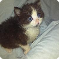 Adopt A Pet :: Beautiful Sue Lynn - Columbus, OH