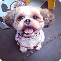Adopt A Pet :: Rue - New York, NY