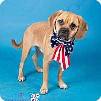 Adopt A Pet :: Bagel - Irving, TX