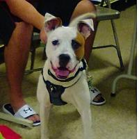 Adopt A Pet :: Rascal - Mt. Clemens, MI