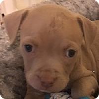 Adopt A Pet :: Duke - Savannah, GA