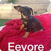 Adopt A Pet :: Eeyore - Chino Hills - Chino Hills, CA
