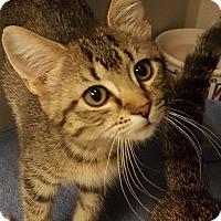 Adopt A Pet :: Ziti - Grayslake, IL