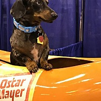 Adopt A Pet :: Oliver - Pearland, TX
