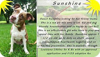 Pit Bull Terrier Mix Dog for adoption in DeRidder, Louisiana - Sunshine