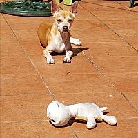 Adopt A Pet :: Tony - Bronx, NY