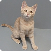 Adopt A Pet :: Elliot - Seguin, TX