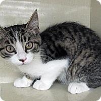 Adopt A Pet :: Pushka - Riverhead, NY