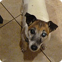 Adopt A Pet :: Collette in Houston - Houston, TX