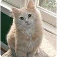 Adopt A Pet :: Dewey - Arlington, VA