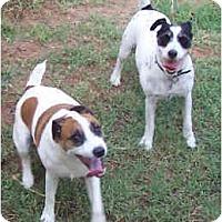 Adopt A Pet :: VALENTINE & LINCOLN - Phoenix, AZ