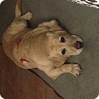 Adopt A Pet :: Karmello - Lewisville, IN