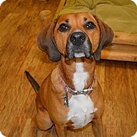 Adopt A Pet :: Moxie - PENDING, in Maine - kennebunkport, ME