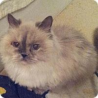 Adopt A Pet :: Myesha - Columbus, OH