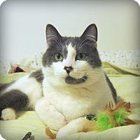 Adopt A Pet :: Toby - Roseville, MN
