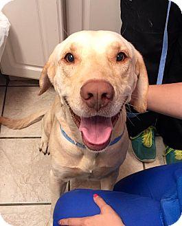 Labrador Retriever Mix Dog for adoption in Cumming, Georgia - Anderson