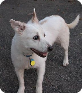 Australian Cattle Dog Mix Dog for adoption in West Des Moines, Iowa - Josie
