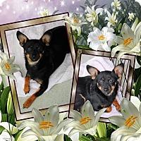 Adopt A Pet :: Simon - Crowley, LA
