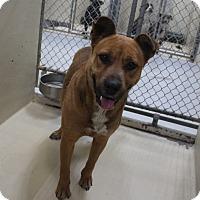 Adopt A Pet :: A19 Virginia - Odessa, TX