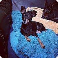 Adopt A Pet :: Adele - Davie, FL