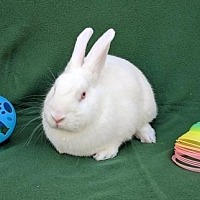 Adopt A Pet :: Silkey - Scotts Valley, CA