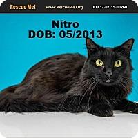 Adopt A Pet :: Nitro - Chandler, AZ