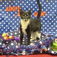 Adopt A Pet :: A080886 - Grovetown, GA