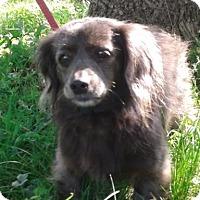 Adopt A Pet :: Ruby (ETAA) - Washington, DC