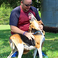 Treeing Walker Coonhound/Hound (Unknown Type) Mix Dog for adoption in Southbury, Connecticut - Laney~new pics~
