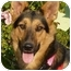 Photo 1 - German Shepherd Dog Mix Dog for adoption in Los Angeles, California - Roo von Kern