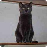 Adopt A Pet :: Polly - North Boston, NY