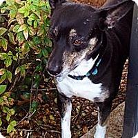 Adopt A Pet :: Liberty - Plano, TX