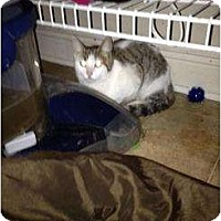 Adopt A Pet :: Sweat Pea - Mobile, AL