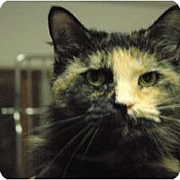Adopt A Pet :: Chewy - Lunenburg, MA