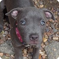 Adopt A Pet :: Gwenn - Torrance, CA