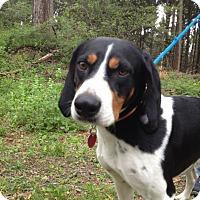 Adopt A Pet :: Kirby - Lancaster, PA