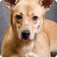 Adopt A Pet :: Sandy- DRD graduate - Owensboro, KY