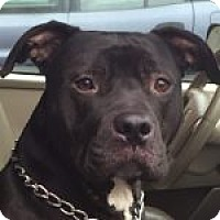 Adopt A Pet :: Juice - Medford, MA