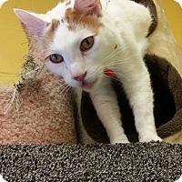 Adopt A Pet :: Michelangelo - Pittsburg, KS