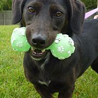Adopt A Pet :: Marsha - Grayslake, IL
