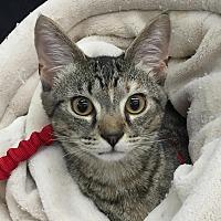 Adopt A Pet :: Marlo - Port Republic, MD