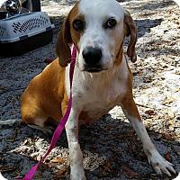 Adopt A Pet :: Lyla - Gainesville, FL