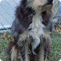 Adopt A Pet :: Hatfield - Terrell, TX