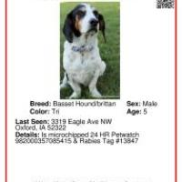 Adopt A Pet :: Charles-MISSING- - Vail, IA