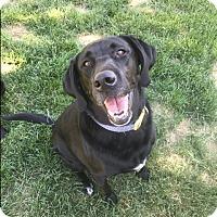 Adopt A Pet :: Rockie - Greeley, CO