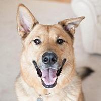 Adopt A Pet :: Herman - Minnetonka, MN