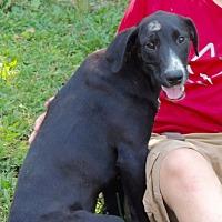 Adopt A Pet :: Blackberry - Joplin, MO